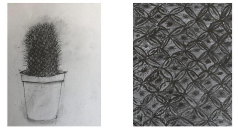Klasse 5: Bleistiftzeichnung (Pflanze mit Detailausschnitt), von Greta Köhn